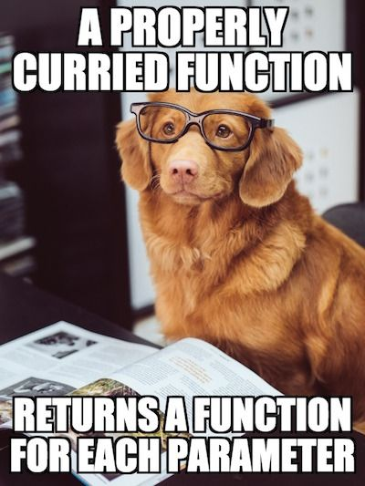 dog-properly-currying-a-function-1